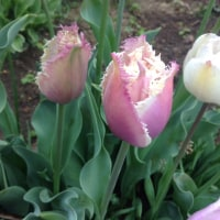 花とメダカの季節