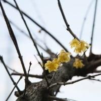 + 春一番・・・ 『天照大御神の神示』に思う信仰の形  天皇の退位希望へのお叱り  伝道の形について