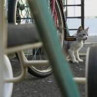 三輪車と一緒
