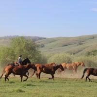 ワイオミング州の馬たち