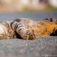 今日もはりきってだらだらするにゃん! @相島のネコたち