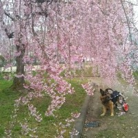 弁慶君と雑草園-⑰