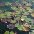 「秘湯の宿」と「モネの池」(土井卓美)
