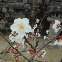 再び梅林寺に行って来ました。
