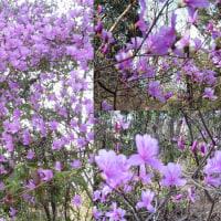 やっと春がやって来きました(紫金山公園から吉志部神社へ)