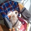 猫飼い人の籐椅子問題