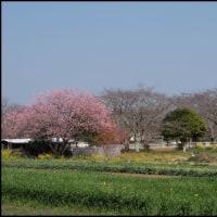 ある農村風景