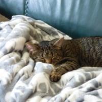 バターチキンカレー&お猫様の為のソファ