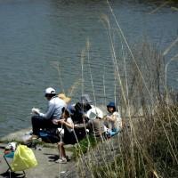 びわ湖勝手気まま歩き 22周-5回目・近江八幡度会橋~琵琶湖大橋!