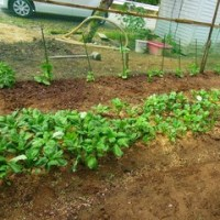 【有機肥料・ランドブレス】の畑