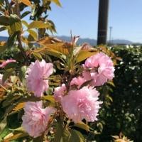 桜の季節 株式会社クラス不動産