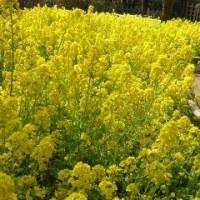 1100 「春の芽生え」