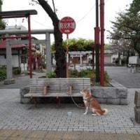 亀出神社で休憩