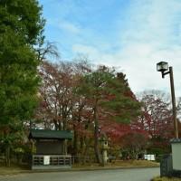 晩秋のもみじ公園と清風荘