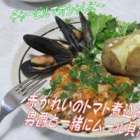 アカカレイのトマト煮込みと男爵ムール貝添え&春のわんわんわん・・