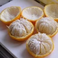 今年も恒例の柚子の種蒔きを・・・