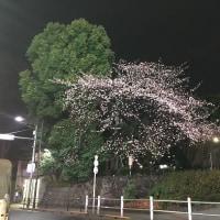 関東出張(1日目)