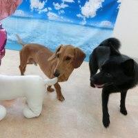 わんこの熱中症にご注意ください!  犬の幼稚園&躾教室@アロハドギー