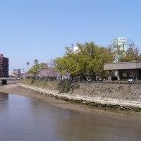 【桜島と桜07】甲突川の桜