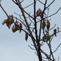 秋の風景と庭の花