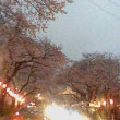 2015桜3