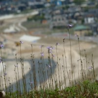 kusabana flower 2