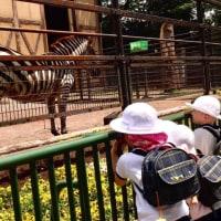 動物園に行きました♪