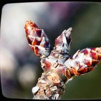 春を待つ……