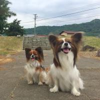 信濃国分寺史跡公園でお散歩6/18
