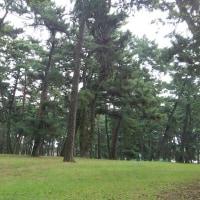 敷島公園 まで歩いてみた