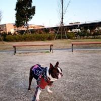 緑の新横浜公園