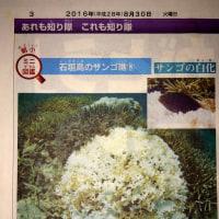 朝日小学生新聞「石垣島のサンゴ礁⑧ サンゴの白化」