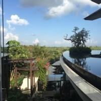 海のアヤナと森のリンバ