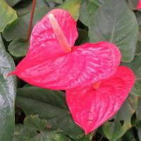 ホノルル(ハワイ5-10)