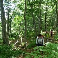 山仲間と深緑ブナ林の大御影山へ