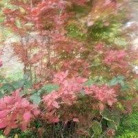 庭木の紅葉が始まる。