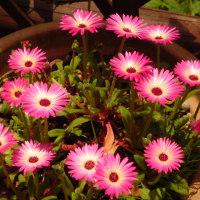 今日の花達、、