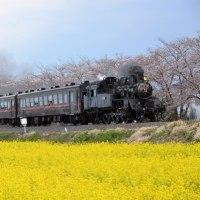 2017年4月15日(土)・真岡鉄道C1266~北真岡にて