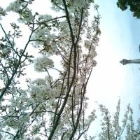 リラックマカフェと桜と通天閣