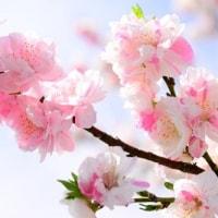 花桃開花の時期にはお祭りへ