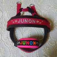 JUNONちゃんのバックルカラー