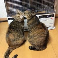 猫の日、幸せな高齢者 \(^o^)/