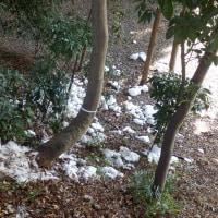54年ぶりの残雪