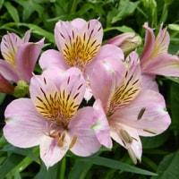 梅雨時の草花