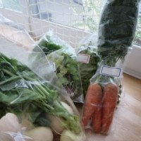 関連会社のお得な野菜たち