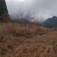 鳥取県岡山県合同中高総体スキー大会クロスカントリーコース確認