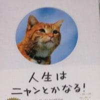 『人生はニャンとかなる!』&綾野剛さん主演『日本で一番悪い奴ら』