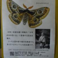 冬の昆虫と自然観察会~里山体験プログラム~