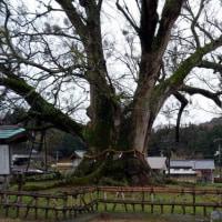 2月5日 兵庫観光2日目・・・多田神社