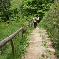 一人歩きの花の金剛山3